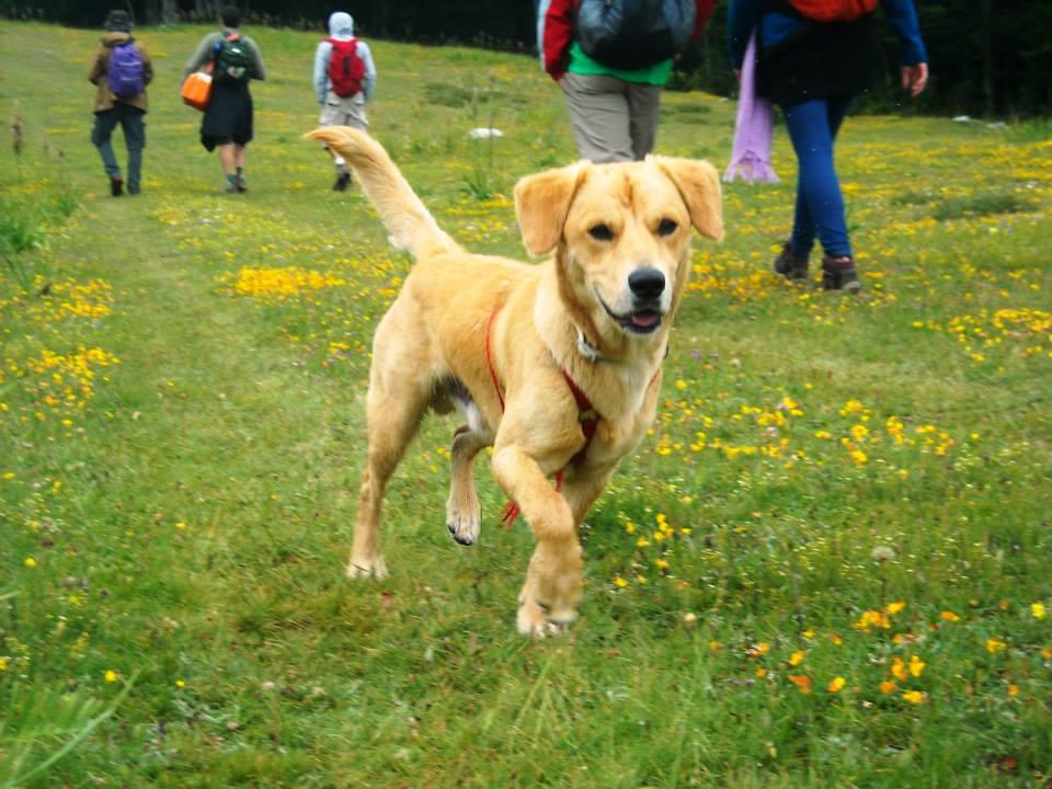 I bisogni fondamentali del cane