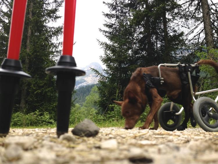 Escursionismo con il cane: perchè farlo e qualche consiglio