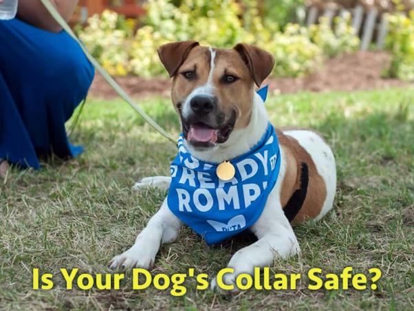 Il collare è pericoloso per il tuo cane?