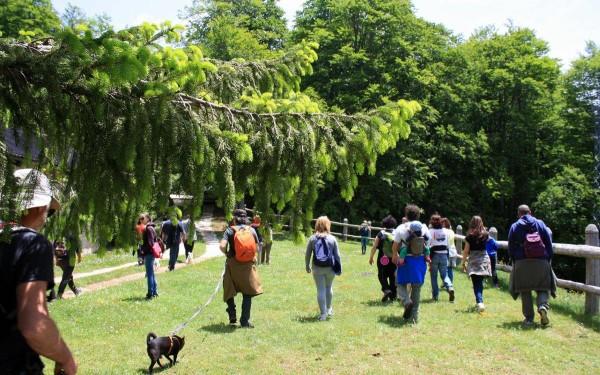 Orme nel parco: Nella Sila per praticare il Dog Walking (e non solo)
