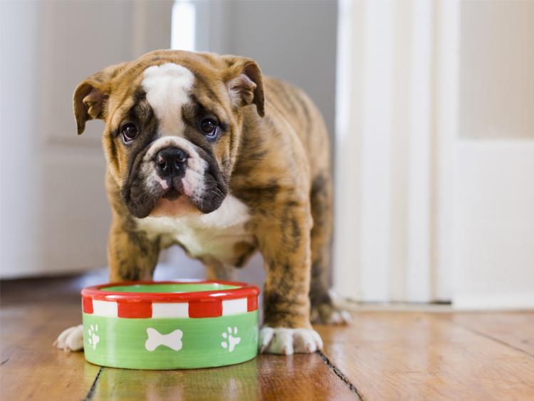 L'alimentazione del cucciolo