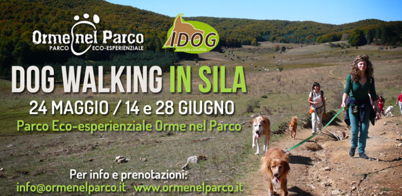 Dog Wolking in Sila