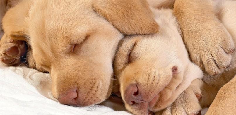 Il cucciolo: sviluppo comportamentale (Prima Parte)